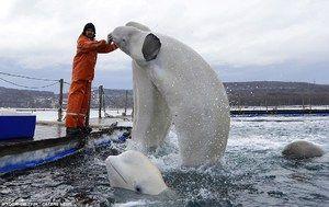 Výcvik veľrýb Beluga