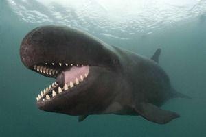 Ozubené veľryby