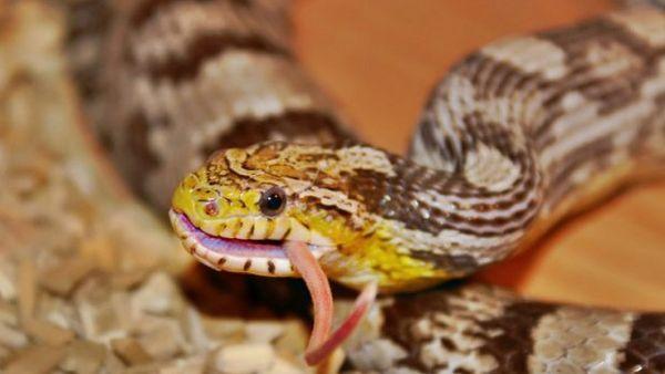 Čo jedia hady