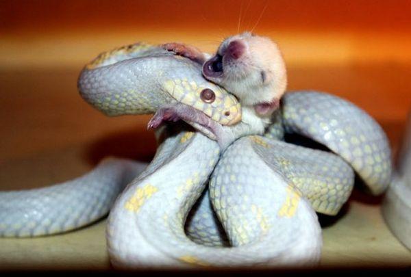 Čo jedia hady doma