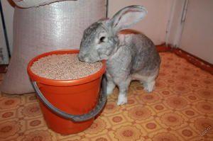 Комбікорм для кроликів своїми руками: як приготувати