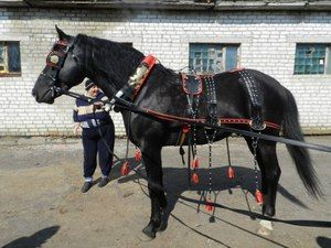 Кінська упряж: найпопулярніші види збрую для коней