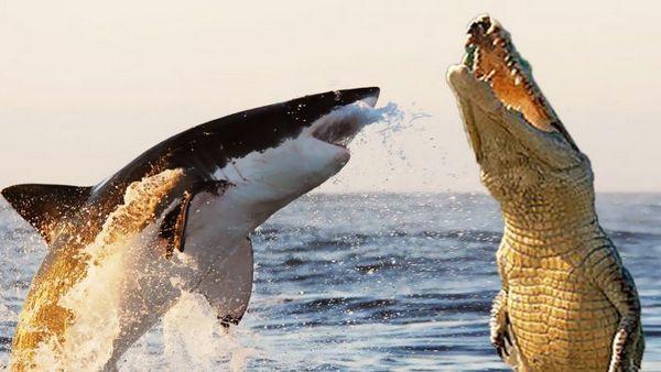 Žralok a krokodíl