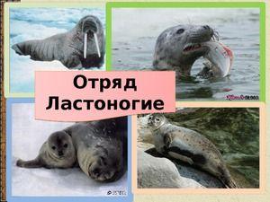 Tulene a ich spôsob života