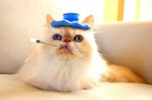 Červy v mačke - aké lieky sú správne?