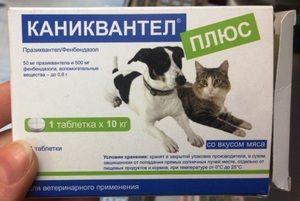 Kanikvantel plus - pomôže liečiť a predchádzať červom u psov a mačiek.