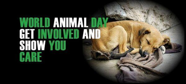 Международен ден на животните