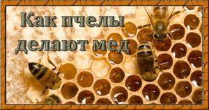 Zlato - ako a prečo to včely vlastne vyrábajú