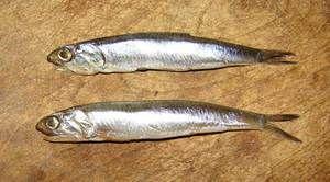 Hamsa - malá ryba