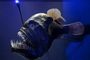 Риба рибалка живе на великій глибині