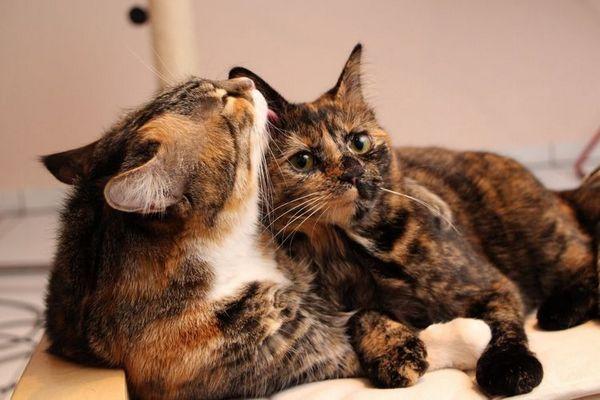 Котка и котка