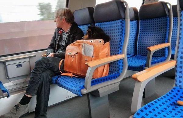 Куче във влака