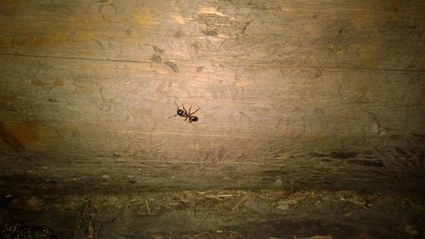 Mravce vo vani: prečo sa tam tento hmyz objavuje a ako sa ich zbaviť