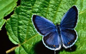O domácom kŕmení motýľov