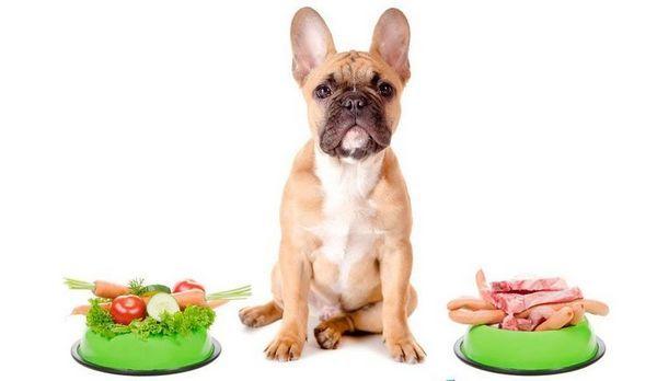 Правильне харчування для собаки