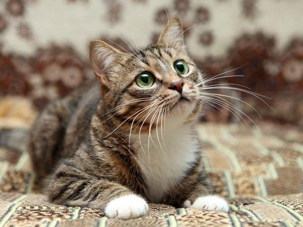 Čo robiť, ak má mačka nefrit?