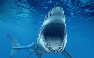 Postava žraloka