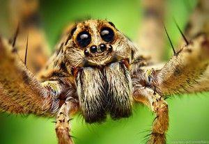 Orgány zraku pavúka