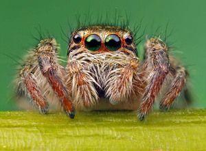 Horse Spider Eyes