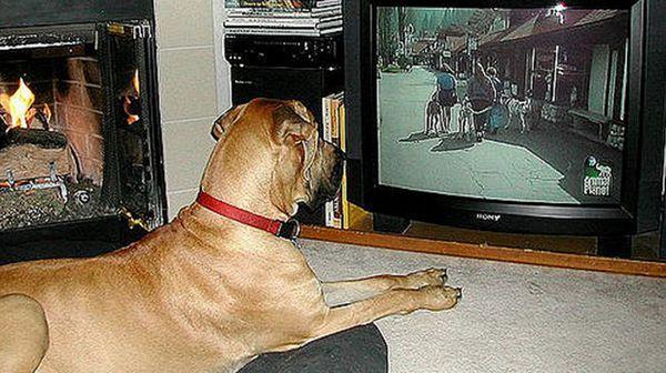 На телевизора