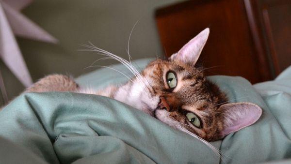 Отит - поширене захворювання у кішок