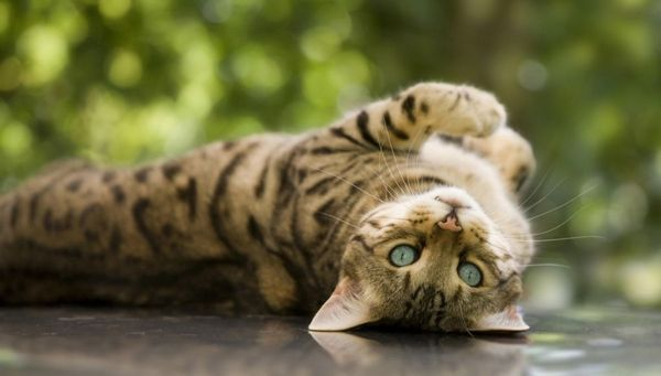 Уникайте тривалого перебування кішки в сирих приміщеннях, щоб уникнути ризик переохолодження
