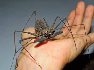 Pavúk sa vzťahuje na zvieratá alebo hmyz