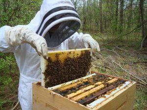 Včelárstvo pre začiatočníkov: tipy a triky