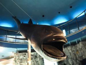 Pelagický žralok veľkoústy: je to pre človeka nebezpečné