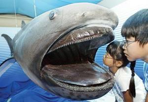 Pelagický žralok veľkoústy: história druhov a súčasnosť