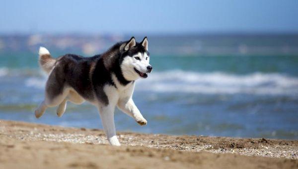 Плюсове и минуси на кучетата с кастрация и на каква възраст правят