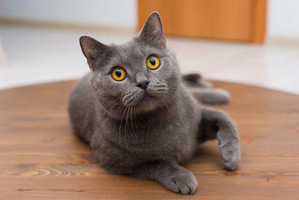 V akom veku začínajú mačky prvé horúčavy