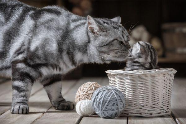 V akom veku môžu byť mačiatka dané?