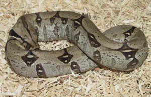 Защо змиите сами се хранят