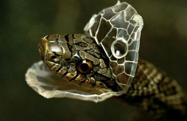 Had zhadzuje kožu