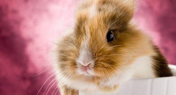 Відповідні імена для декоративного кролика