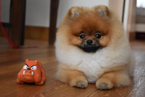 При зміні зубів помаранчеві слід купувати іграшки