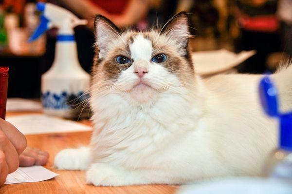 Vidia mačky druhý svet?