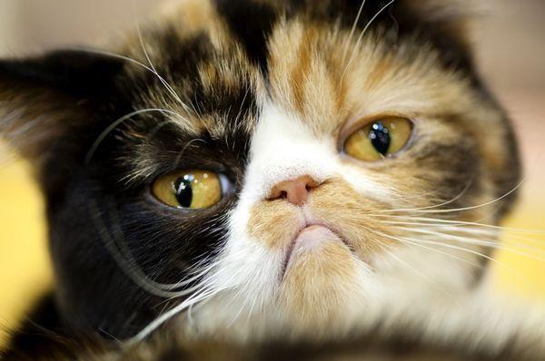 Bolí ma mačku?