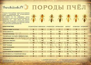 Včelie plemená: popis a fotografie najobľúbenejších včelích plemien