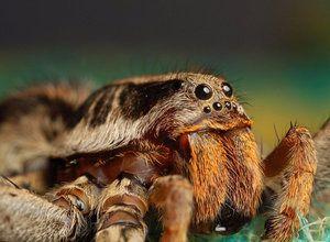Правила за държане на паяк у дома
