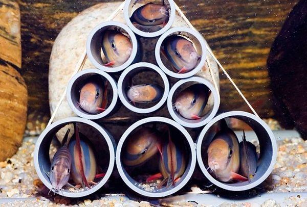 У нерестовіке повинні бути присутніми камені, корчі і сильна течія