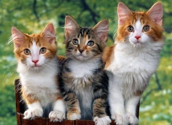 Správne rodičovstvo vašej mačky: odborné poradenstvo a vedenie