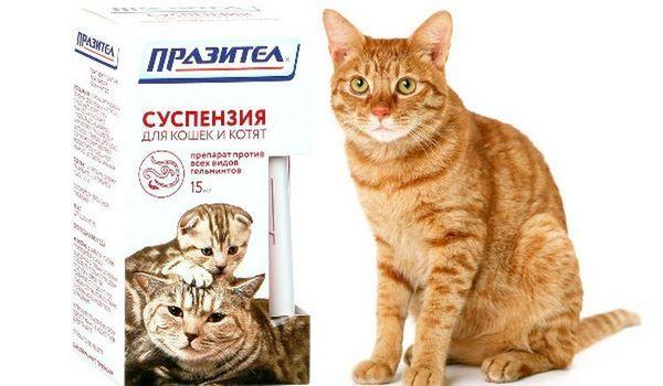 Ďumbier mačka a Prazitel