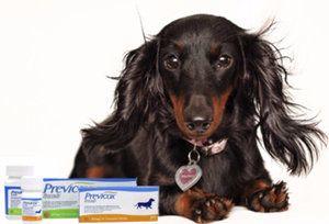 «Превікокс»: як давати собак