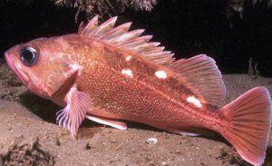 Чести заболявания на аквариумните риби