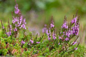 Rastliny tundry