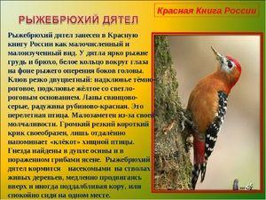 Червената книга на Русия - птици, включени в нея