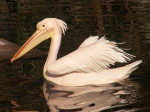 Редки и застрашени видове птици