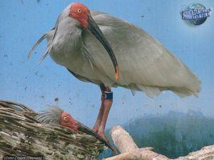 Застрашени видове птици